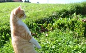 Обои кот, взгляд, природа, поза, котэ