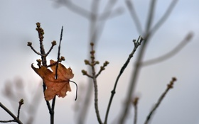 Обои осень, ветки, фото, листок, листья, tree, обои