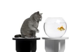 Картинка кот, аквариум, рыбка