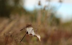 Обои осень, трава, ветер, стрекоза