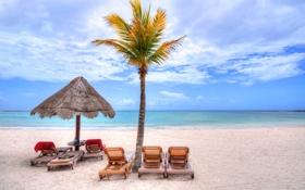 Картинка осень, тропики, небо, пальма, море, зонт, берег