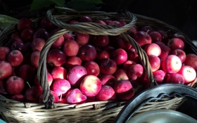 Обои осень, корзина, яблоко, урожай