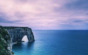 Картинка море, птицы, скалы