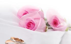 Картинка ткань, wedding rings, roses, обручальные кольца, cloth, розы, flowers