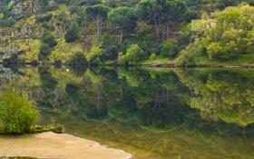 Картинка зелень, деревья, река, остров, дома, коса