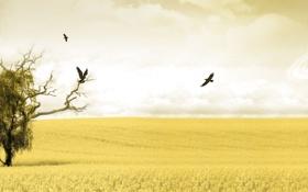 Картинка поле, небо, птицы, желтый, дерево