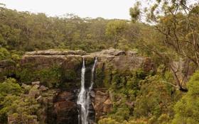 Картинка деревья, скала, ручей, камни, водопад, Австралия, Robertson