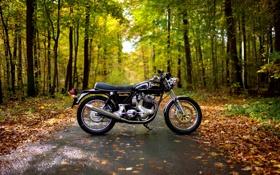 Обои осень, деревья, парк, листва, дорожка, мотоцикл, Norton 850 Commando