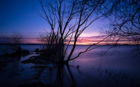 Картинка облака, небо, зарево, силуэт, вечер, озеро, дерево