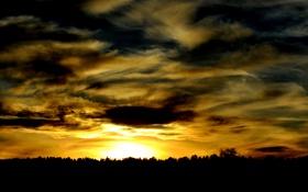 Картинка лес, небо, облака, деревья, закат