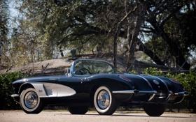 Обои деревья, Chevrolet, 1960, спорткар, corvette, шевроле, классика