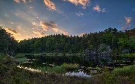 Картинка лес, небо, трава, облака, закат, озеро, пруд