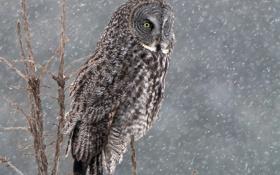 Картинка зима, снег, дерево, сова, птица