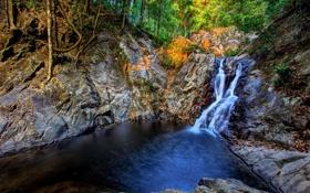 Картинка лес, деревья, река, скалы, водопад, поток