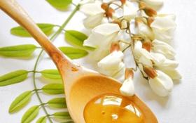 Обои цветы, ветка, мед, ложка, сладости, white, белые