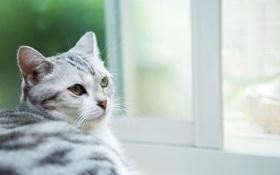Картинка кошка, глаза, кот, усы, взгляд, кошак