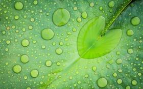 Картинка зеленый, капли, вода, лист, сердечко