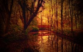 Обои осень, природа, парк, канал, мостик