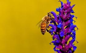 Обои цветок, пчела, растение, насекомое