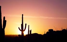 Обои солнце, закат, кактус, панорама
