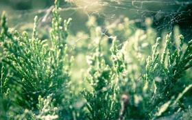 Обои паутина, свет, трава