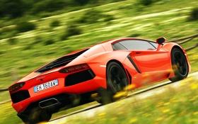 Обои оранжевый, движение, вид сзади, ламборджини, авентадор, lamborghini aventador lp700-4