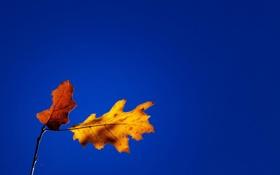 Картинка осень, небо, листья, природа, ветка