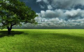 Картинка поляна, облака, тень, небо, дерево