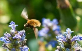 Картинка насекомое, цветы, фон, голубые