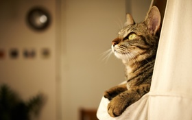 Обои кот, дом, отдых, котэ
