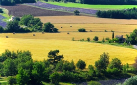 Обои Прованс, дом, лаванда, деревья, Франция, плантации, поля