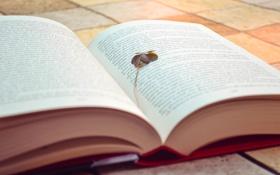 Обои текст, буквы, листок, книга, клевер, страницы