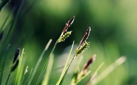 Обои зелень, трава, serenity
