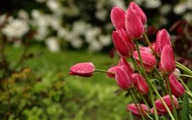 Картинка капли, цветы, природа, дождь, стебли, весна, сад