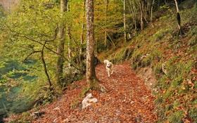 Картинка осень, парк, собака