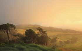 Картинка поле, лес, природа, пальмы, утро