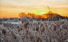 Картинка иней, трава, пейзаж, закат