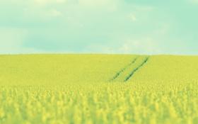 Обои пейзажи, поле, трава, небо, цветы