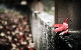 Обои осень, макро, город, лист
