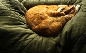 Картинка кот, cat, спит, рыжий, sleep