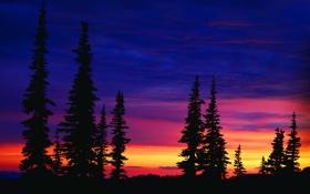 Обои небо, облака, пейзаж, закат, обои, ель, вечер