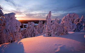 Картинка зима, снег, деревья, природа, фото, дерево, пейзажи
