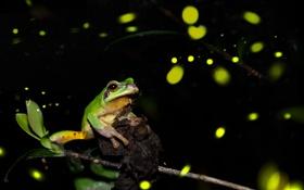 Обои ночь, светлячки, лягушка, ветка