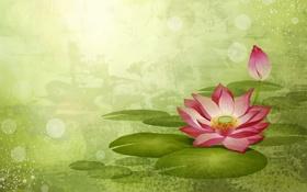 Обои цветы, зеленый, кувшинки