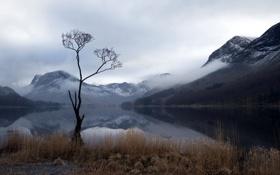 Картинка горы, озеро, дерево