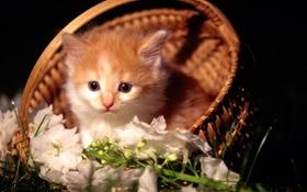 Обои котенок, глазки, маленький