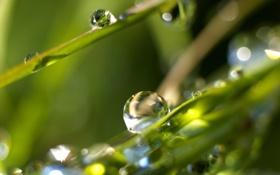 Обои природа, роса, Трава