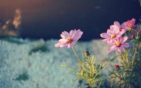 Обои макро, цветы, природа, фото, растения, лепестки, обои. фон