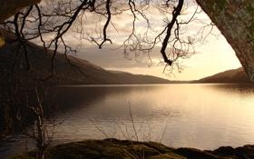 Обои озеро, ветви, свод