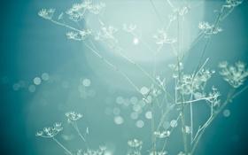 Обои фото, растение, голубой, цвет, обои, картинка, фон